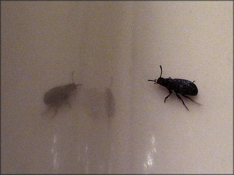 small bugs in bedroom little tiny bugs in bedroom com small black flying  bugs bed . small bugs ...